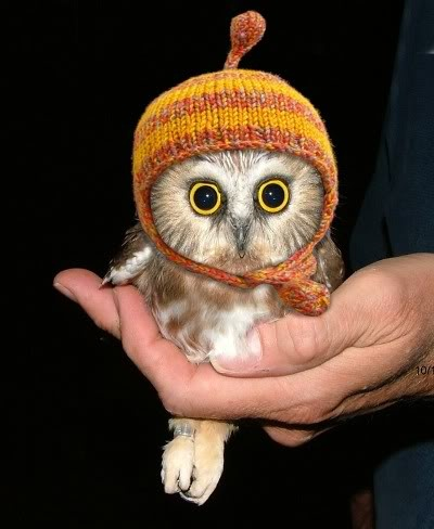 baby owl knitted beanie