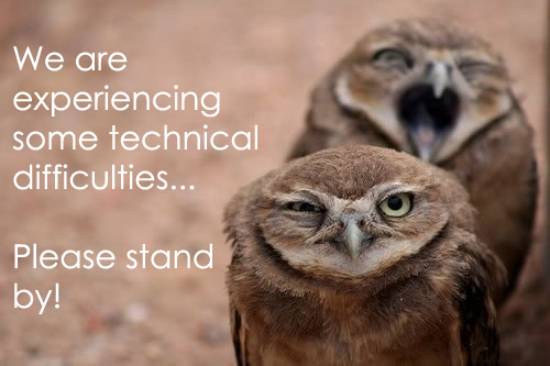 funny owl experiencing technical difficulties two owls