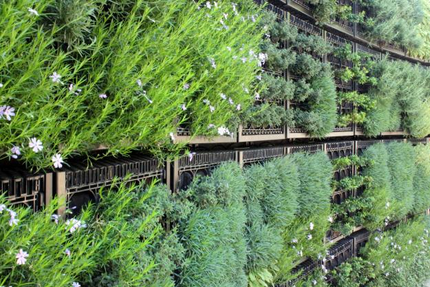 edible garden herb wall
