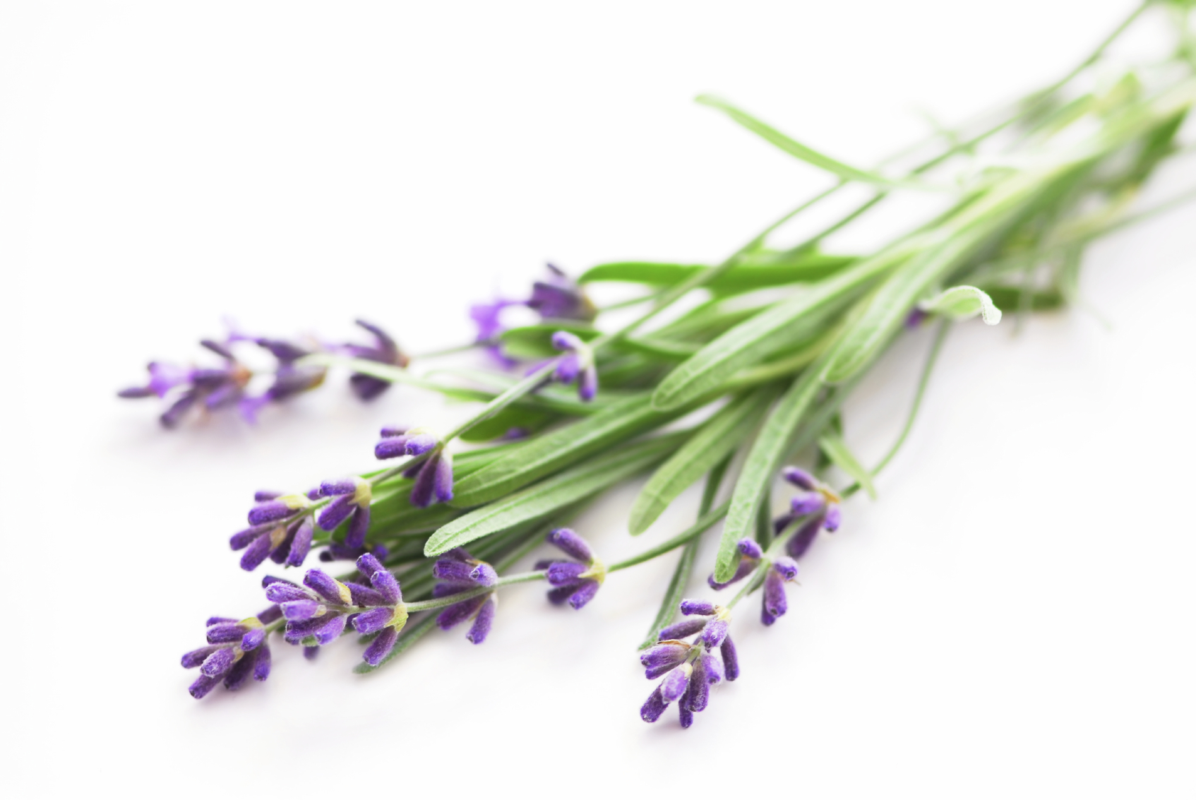 Skingredients: SkinOwl's Lavender Oil